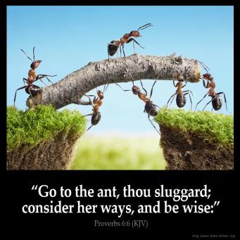 proverbs_6-6